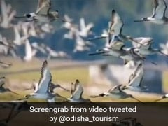 Thousands Of Migratory Birds In Odisha As Winter Sets In
