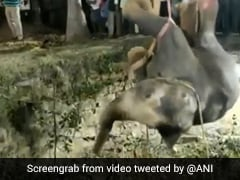 Video: Elephant Trapped In 50-Foot Well Rescued In Tamil Nadu