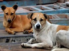 Dog Meat Can Be Sold In Nagaland, Court Puts Government Ban On Hold
