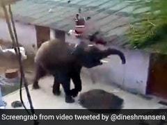 भूखे हाथी ने गांव में घुसकर मचाया आतंक, गुस्से में उठाई सूंड और फिर किया कुछ ऐसा - देखें Video