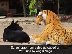 शख्स ने कुत्ते के सामने रख दिया नकली बाघ, देखते ही दिया ऐसा रिएक्शन- 50 लाख से ज्यादा बार देखा गया YouTube Video