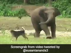 कुत्ते ने किया नाक में दम, तो हाथी के बच्चे ने पीछे लगाई दौड़ और फिर किया कुछ ऐसा - देखें पूरा Video