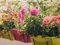रेलवे अधिकारी ने शादी कार्ड पर फूलों और सब्जियों के बीज भेजकर किया लोगों को आमंत्रित