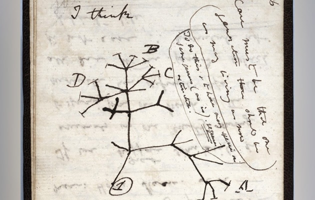 Charles Darwin's Notebooks Reported 'Stolen' From Cambridge University