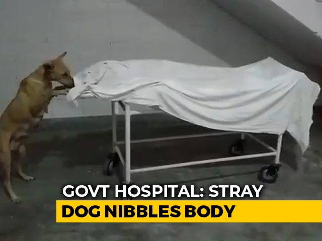 Video : Shocking Video Shows Stray Dog Nibbling At Girl's Body In UP Hospital