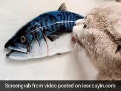 शख्स ने बनाई मछली की 3D पैंटिंग, बिल्ली ने किया Attack और फिर गुस्से में किया कुछ ऐसा - देखें Video