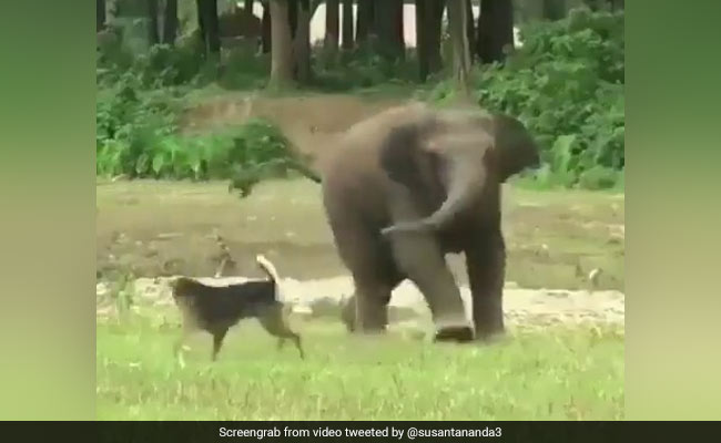 This Baby Elephant Found A Friend In A Dog. Watch Their Adorable Video