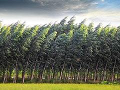 जलवायु परिवर्तन: सदी के अंत में 3 से 6 दिन पहले झड़ने लगेंगी कुछ वृक्षों की पत्तियां