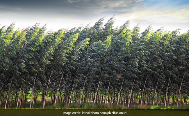 Before COP26, UN Summit COP15 To Tackle 'Unprecedented' Biodiversity Threats