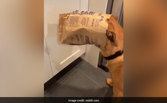 A Dog Gets Caught Stealing Popcorn And The Video Will Make You Giggle
