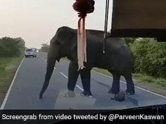 हाईवे पर आकर खड़ा हो गया हाथी, बस में सूंड डालकर दिनदहाड़े की केलों की लूट - देखें Viral Video