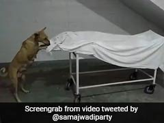 Shocking Video Shows Stray Dog Nibbling At Girl's Body In UP Hospital