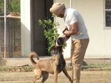Video : Canine Warriors To Fight Drug Menace In Punjab