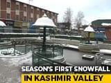Video : Season's First Snowfall In Kashmir Valley
