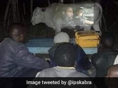 गाय की पेट को स्क्रीन बनाकर लोगों ने देखी फिल्म, IPS बोला- 'भगवान 2020 जल्द खत्म कर दो अब...'