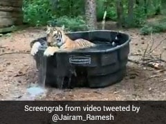 """What Does Anand Mahindra Call A Bath Tub Used By A Tiger? A """"Ticuzzi"""""""
