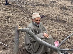 Kashmir Forest Land Drive Fells Thousands Of Apple Trees, Evicts Tribals