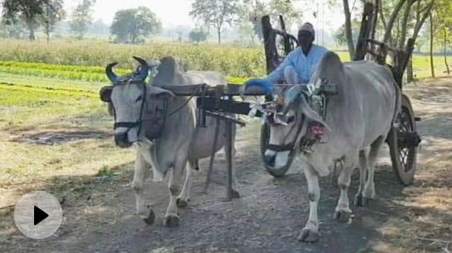 Madhya Pradesh Farmers in dilemma over farm laws protest and other issue – असमंजस में मध्य प्रदेश के किसान वीडियो – हिन्दी न्यूज़ वीडियो एनडीटीवी ख़बर