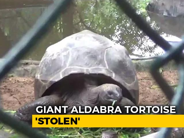 "Video : Aldabra Tortoise, Among Largest In World, ""Stolen"" From Chennai Park"