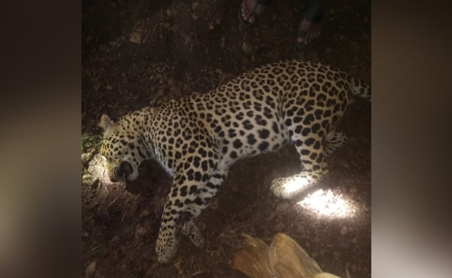 In A Locality In Ahmedabad Outskirts, Cages Set Up Amid Fear Of Leopards