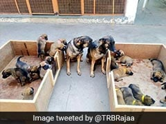 Only Indian Names For Security Force ITBP's Dog Squad