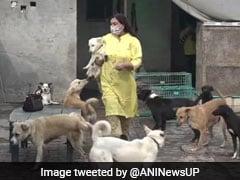 40 साल से ये महिला बेसहारा कुत्तों की कर रही हैं देखभाल, आगरा में खोला है 'कैस्पर्स होम'