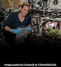 Watch Video: NASA Astronauts Harvest First Ever Radish Crop In Space