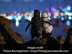 Pic Of 2 Widowed Penguins Comforting Each Other Wins Photography Contest