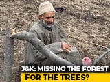 Video : Kashmir Forest Land Drive Fells Thousands Of Apple Trees, Evicts Tribals