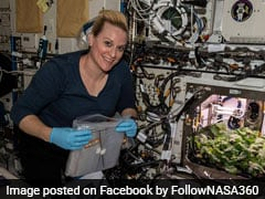 Watch Video: NASA Astronauts Harvest First Ever Radish Crop On International Space Station