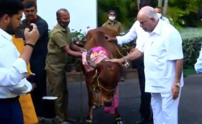 Falling Short In Council, Karnataka Government Takes Ordinance Route To Cow Protection