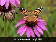 देश का पहला पॉलीनेटर पार्क : तितलियों, मधुमक्खियों, पक्षियों की 40 से ज्यादा प्रजातियां मौजूद