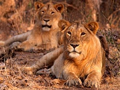 Centre Releases Management Report Of 146 National Parks, Wildlife Sanctuaries