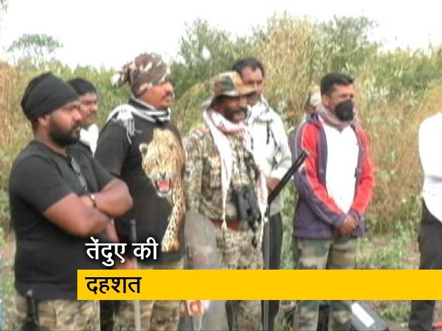 Videos : महाराष्ट्र के बीड जिले में तेंदुए ने तीन लोगों को मौत के घाट उतारा