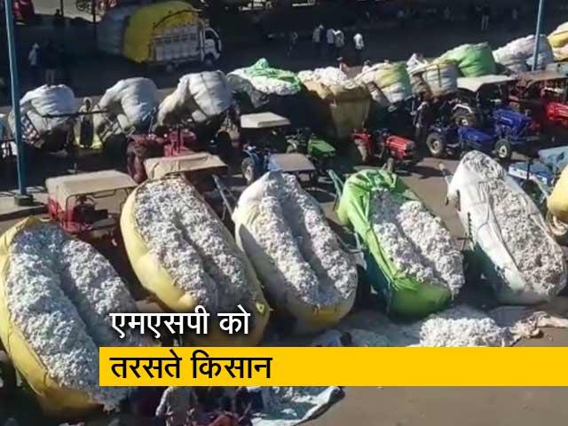 Video : कपास की फसल अच्छी होने के बाद भी किसान बेहाल क्यों ?
