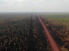 Deforestation Wiped Out 8% Of Amazon Rainforest In 18 Years: Study