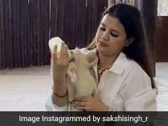 MS Dhoni की पत्नी ने बाघ के बच्चे को गोद में बिठाकर पिलाया दूध, फिर मगरमच्छ को ऐसे खिलाया खाना - देखें Video