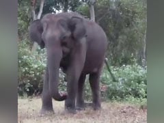 A Tiger Stalks An Elephant In Video Shared By Anand Mahindra