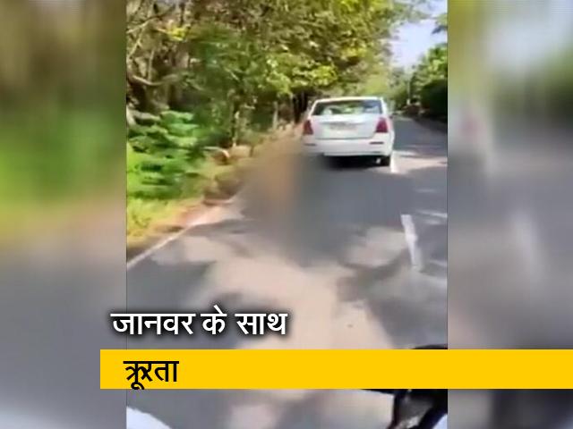 Videos : केरल : कुत्ते को कार से बांधकर घसीटा, केस दर्ज