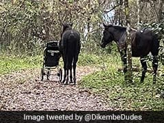 These Wild Horses Blocked A Trail Until They Were Given A Stroller. Watch