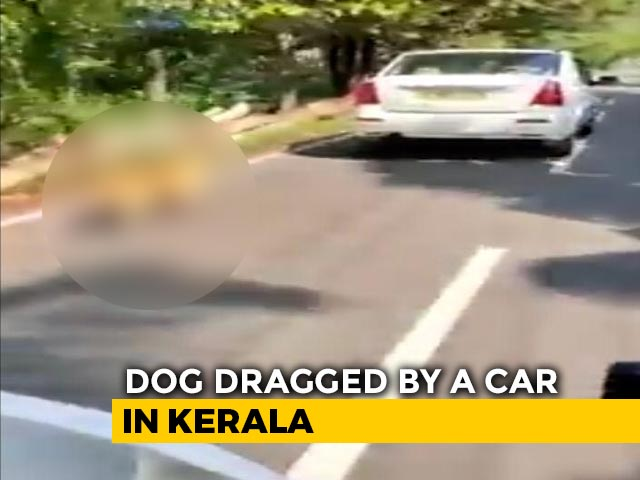 Video : Dog Tied To Car, Dragged On Road In Kerala; Driver Arrested