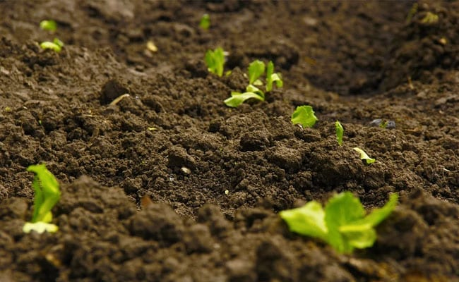 World Soil Day 2020: What We Can Do To Stop Soil Pollution
