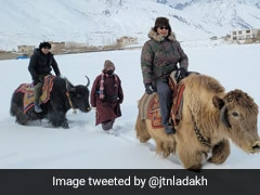 Yak Riding At -20 Degrees Is Part Of This Winter Sports Event, See Pics