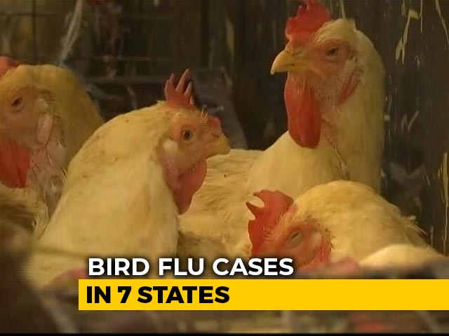 Video : Avian Flu Confirmed In 7 States, Centre Scrambles To Limit The Spread
