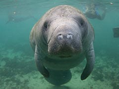 """Investigation Into Who Etched """"Trump"""" On Manatee's Back"""