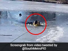 बर्फ से जमी नदी के अंदर फंसा हुआ था कुत्ता, फायरफाइटर बचाने के लिए कूद गया अंदर और फिर... देखें Video