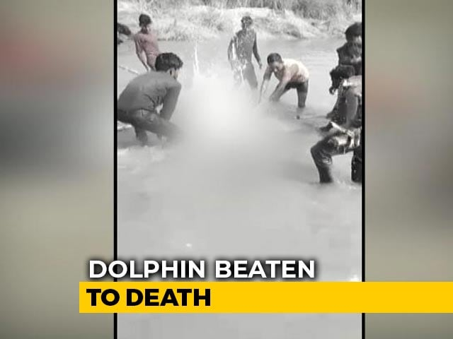 Video : Gangetic Dolphin Beaten To Death In UP, 3 Arrested As Video Goes Viral