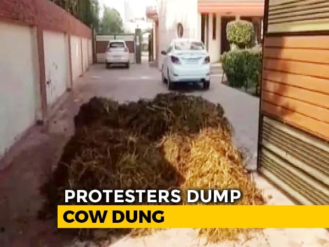 Video : Cow Dung Dumped At BJP Leader's House In Punjab