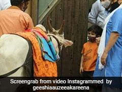 तैमूर अली खान ने की घर के बाहर आई गाय की सेवा तो उसके मालिक बजाने लगे 'ओले ओले' गाना