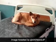 Dogs Enter Wards, Lie On Beds At UP Hospital